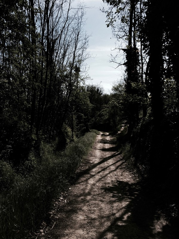 Sentiero boschi.jpg