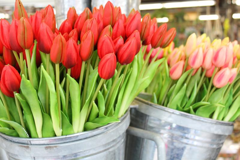 03 Tulipani OK