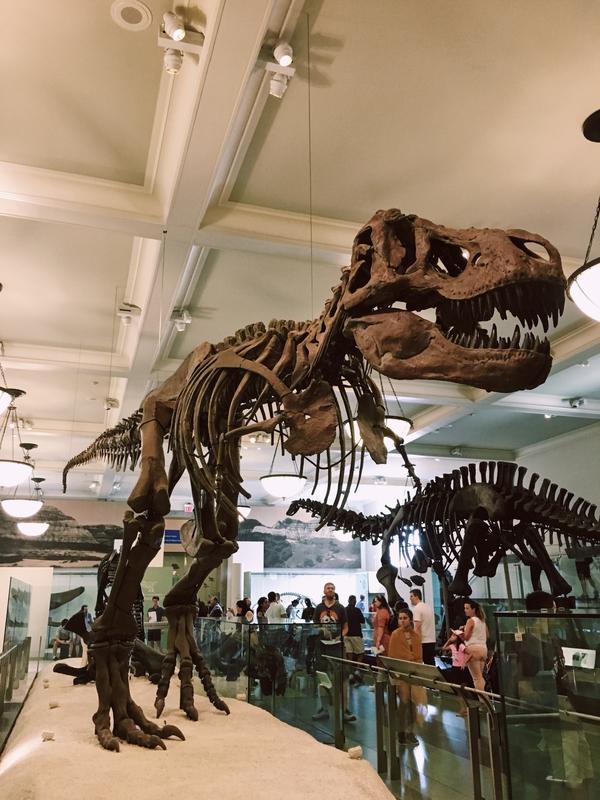 American Museum Natural History 02.jpg