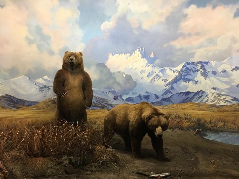 American Museum Natural History 04.jpg