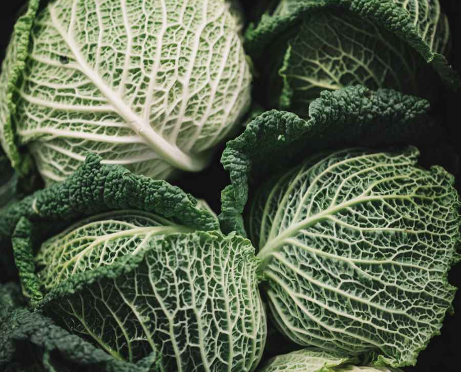 macro photography of green cabbages